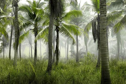 BadAss Island Obstacle Zone 5: Gorilla Gardens